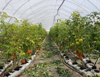 Felgyorsította a fogyasztói szemléletváltást a járvány: egyre többen választják a helyi zöldséget