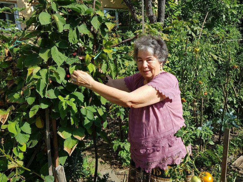 Választás kérdése az egészséges élelmiszer – beszélgetés T. Veress Évával a biotermesztésről