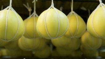 Európa-szerte ismertek a mezőségi sajtok