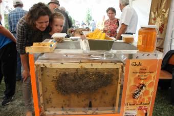 Országos Méhészeti Program: több mint ötezer méhész nyújtott be igénylést a támogatásokra