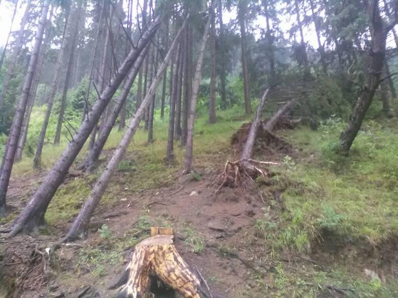 Kidöntött fák maradtak a vihar után