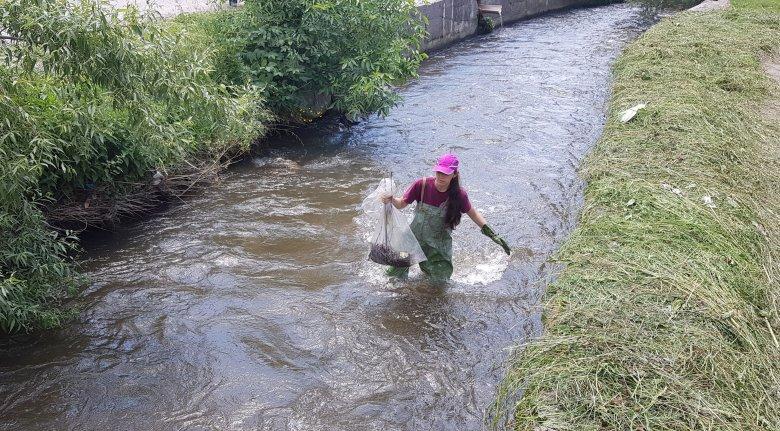 Újabb szakaszon tisztították meg a Békény-patakot