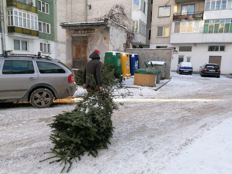 Tüzelőanyag lesz a kidobott karácsonyfákból