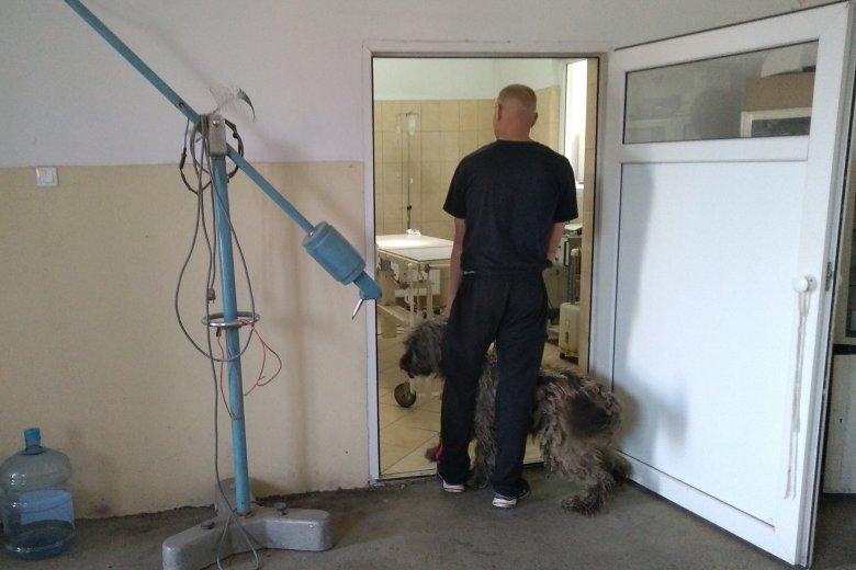 Ingyenes kutyaivartalanítási akció Gyergyószentmiklóson