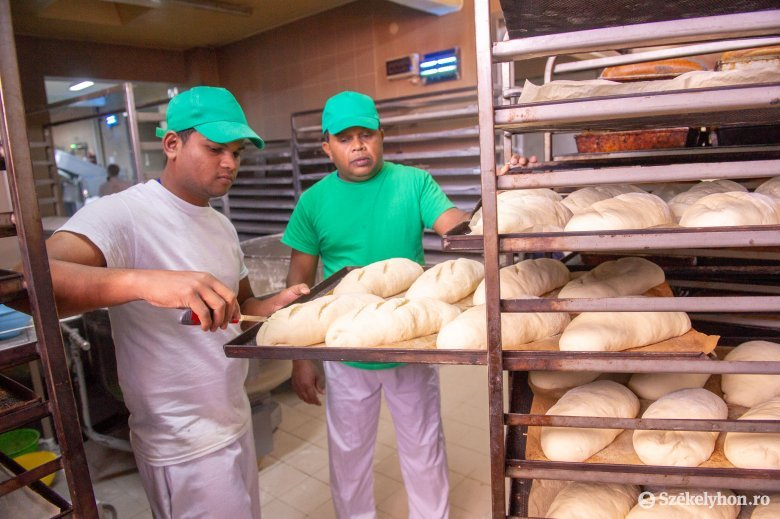 Maradnak a kenyérsütő részlegen az ázsiai vendégmunkások, akikhez továbbiak csatlakozhatnak Ditróban