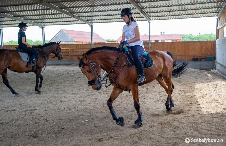 Szintet kell ugrania az erdélyi lovászatnak