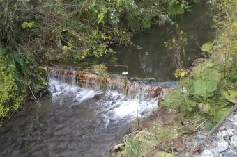 Visszatelepítik a Békény-patakába a pisztrángokat