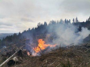 Mintegy öt hektár erdőgazdálkodási terület égett le Gyergyószéken