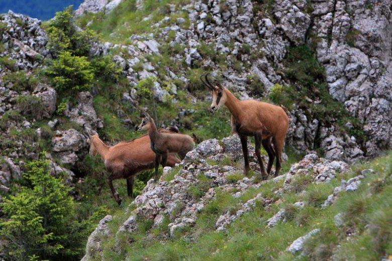 Románia két emblematikus állatfaját nyilvánítják védetté
