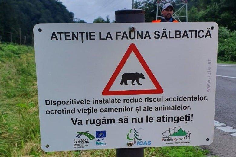 Virtuális kerítéssel előznék meg a vadak által okozott közúti baleseteket