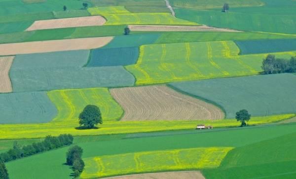 Egyre drágábbak a termőföldek: Ilfovban már hektáronként 9000 eurót is fizettek, a tavalyi átlagár 4380 euró volt