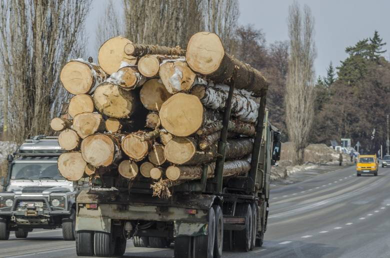 Ellenőrzésen fennakadt rönkszállítók: papíron kevesebb a fa, mint a valóságban