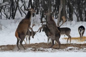 Állatkert nyílhat a kolozsvári Hója-erdőben
