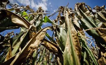 Szeptemberben kaphatják meg a gazdák az aszálykárok enyhítésére szánt támogatást