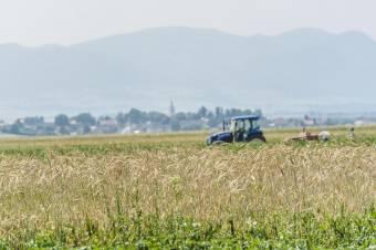 Közel felére csökkent idén a romániai gabonatermés az aszálykárok miatt