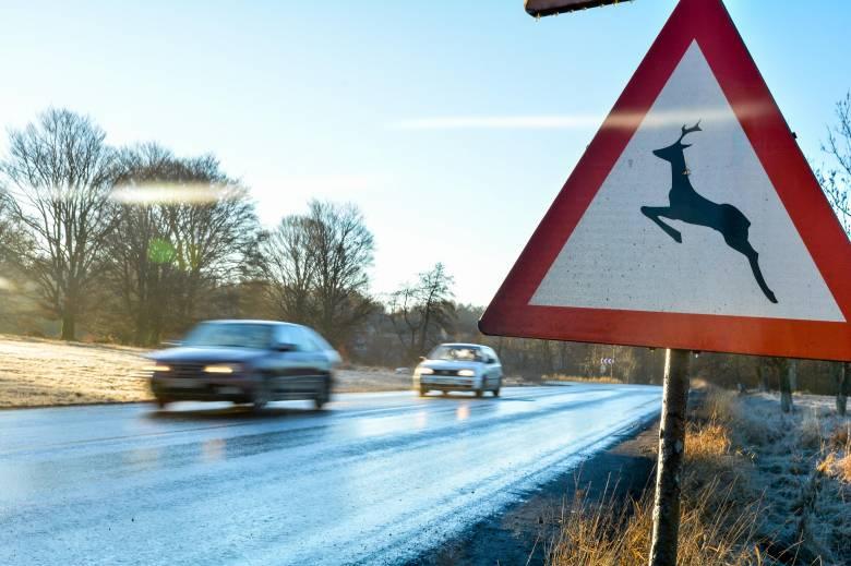 Balesetveszélyes őzek miatt érdemes jobban figyelni az utakon