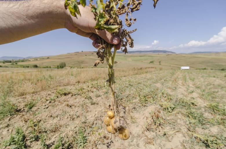 Péntektől utalja a kártérítéseket az aszály sújtotta gazdáknak a minisztérium