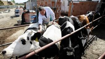 Sorra zárnak be a falusi állatorvosi rendelők – Fogy az állatlétszám, nagy a versenyhelyzet a piacon