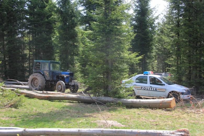 Az illegális fakitermelésről filmet forgató újságírókat bántalmazott egy húszfős csoport Suceava megyében