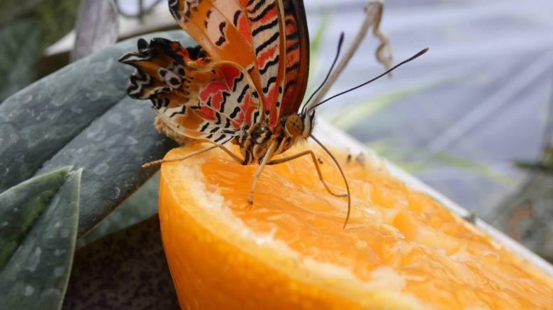 Repkedő színkavalkád a kolozsvári füvészkertben
