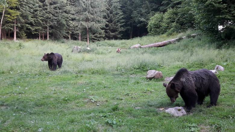 Elvi hozzájárulásukat adták a koalíció vezetői a veszélyes medvékkel szembeni fellépést szabályozó rendelethez