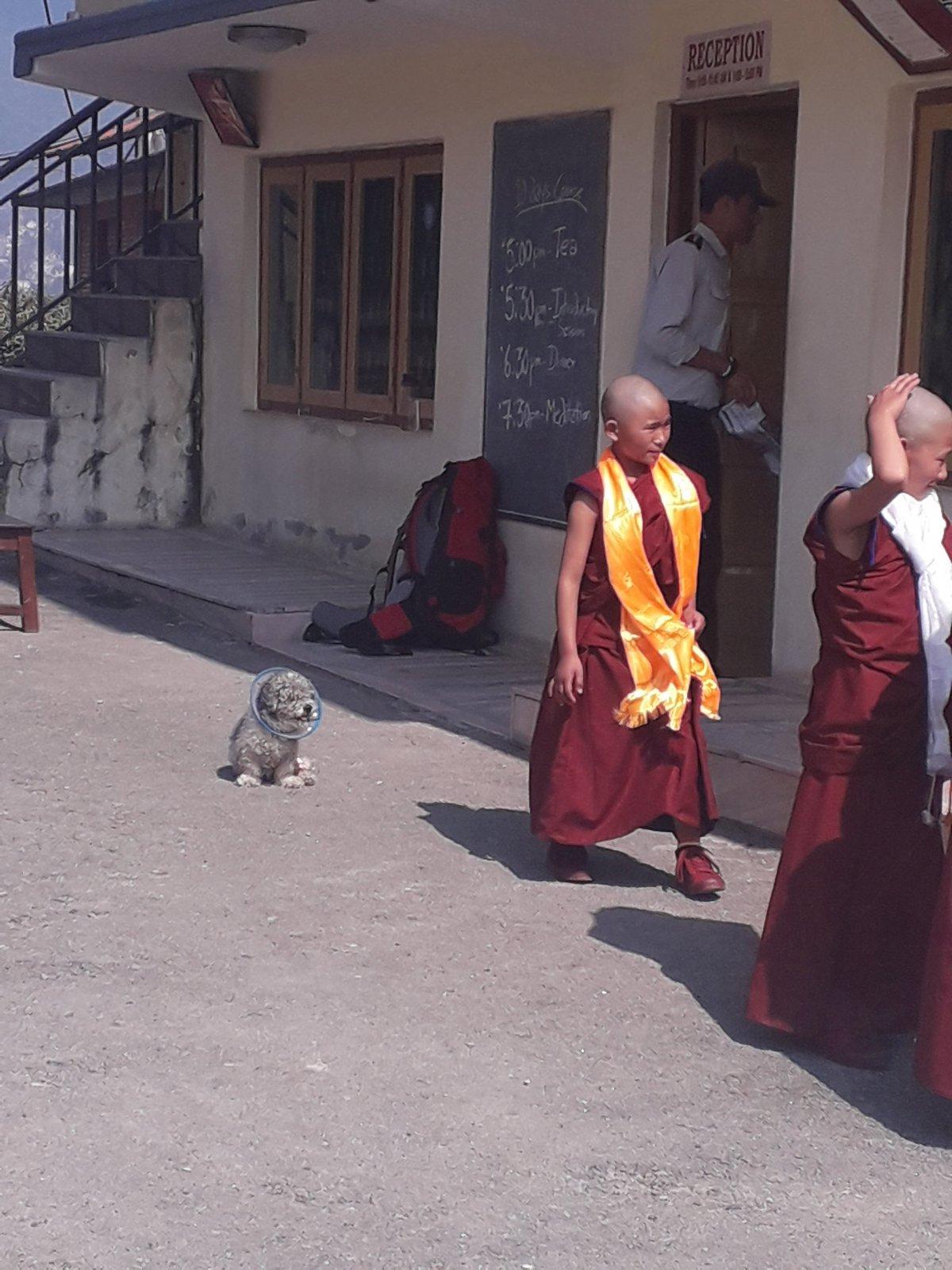 A buddhista kolostor ifjú lakói az udvaron •  Fotó: Kiss Judit