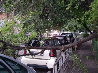 Fákat csavart ki az orkánerejű szél az Erdélyen végigsöprő ítéletidőben