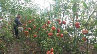 Otthonról adják el a kistermelői zöldségeket a tudatos vásárlóknak