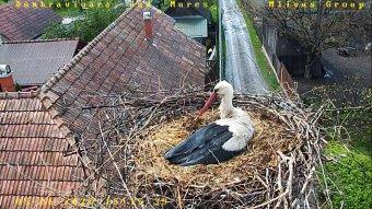 Pozitívan hat a madarakra a zajcsökkenés