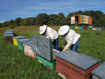 """Lejárt a méhészek """"édes"""" élete? Egymást követő két esztendőben is rossz évet zárnak a méztermelő gazdák"""