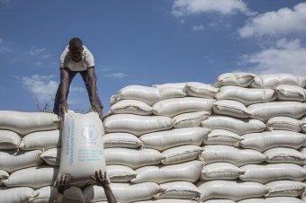 Az ENSZ élelmezési programjának ítélték a Nobel-békedíjat