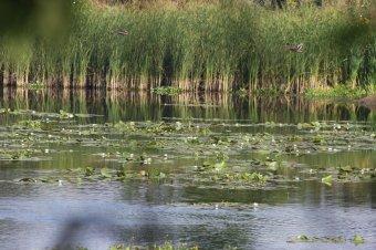 """Ökoturisztikai """"gyöngyszem"""" létesül Szatmár megyében"""