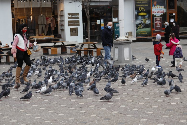 Betiltották a galambok etetését Temesváron, pénzbírságra számíthat, aki mégis morzsát szór nekik