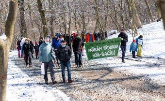 Védett területté nyilváníttatnák a kolozsvári Hója-erdőt