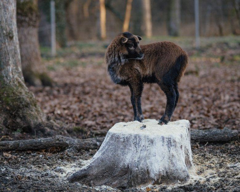 Elköltöztetik a temesvári állatkert lakóit a létesítmény felújításának idejére