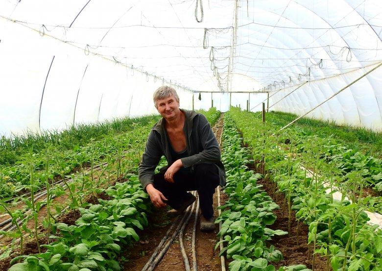 """Fóliaházban termelt """"házi ízű"""" zöldségek: az elégedett vásárlók hazajárnak a helyi gazdákhoz"""
