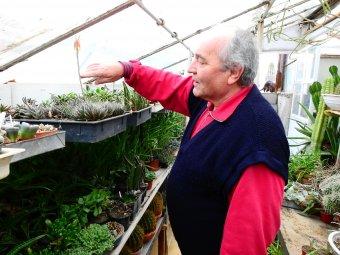 Jövedelemforrás is lehet a kaktuszgyűjtő szenvedély