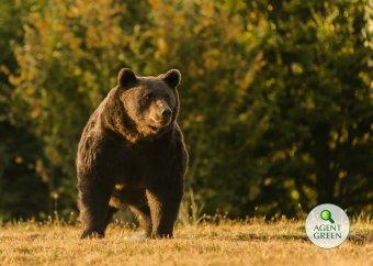 Valószínűleg az Európai Unió legnagyobb medvéjét lőtte ki egy liechtensteini herceg Székelyföldön