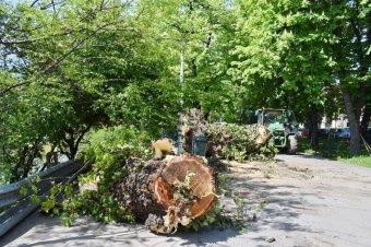 Hajlandó együttműködni a zöldekkel a Sebes-Körös védelme érdekében a nagyváradi polgármester