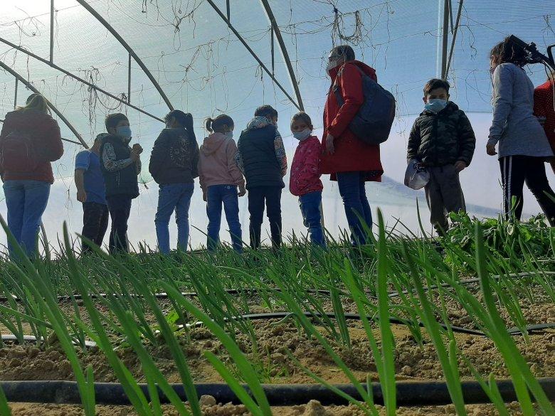 Kertből iskola az egészséges életmódért – Sikeresnek bizonyult a szatmári és nagybányai civil szervezetek közös projektje