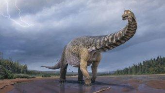 Újabb dinoszauruszfajt azonosítottak Ausztráliában, a hatalmas titanoszaurusz mintegy 90 millió éve élhetett