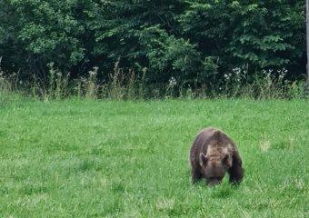 Fiatal férfira rontott rá a medve a Székelyföldön, súlyos sérüléseket szenvedett az áldozat