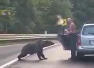 Szinte a tenyeréből etette a medvét az úton félrehúzó vranceai sofőr