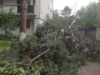 Végigsöpört a vihar a Szilágyságon, fákat, oszlopokat döntött ki