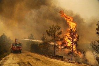 Törökországban szinte teljesen megfékezték a lassan két hete pusztító erdőtüzeket