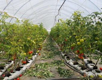 Nem harapnak rá az áruházláncok a kistermelői zöldségre, sok az import és a viszonteladó
