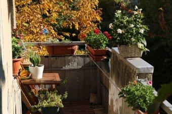 Díjazták a legszebb kolozsvári virágos erkélyt, kertet