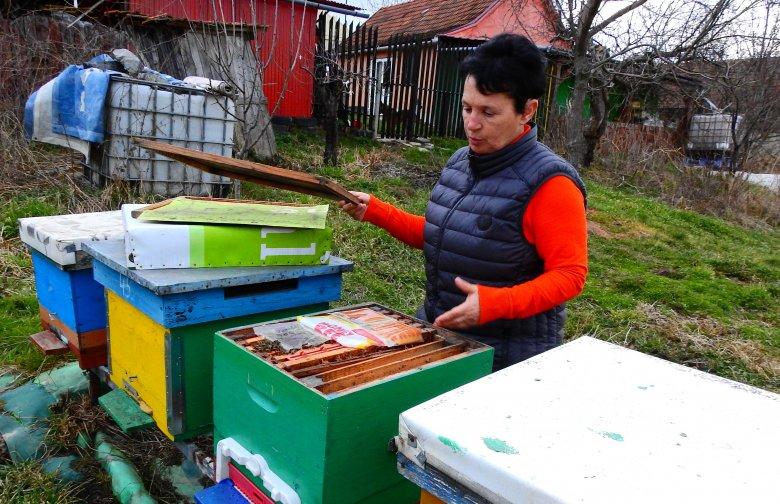 Édes élet száz méhcsaláddal: gazdálkodásra váltotta íróasztalát egy Bihar megyei méhész
