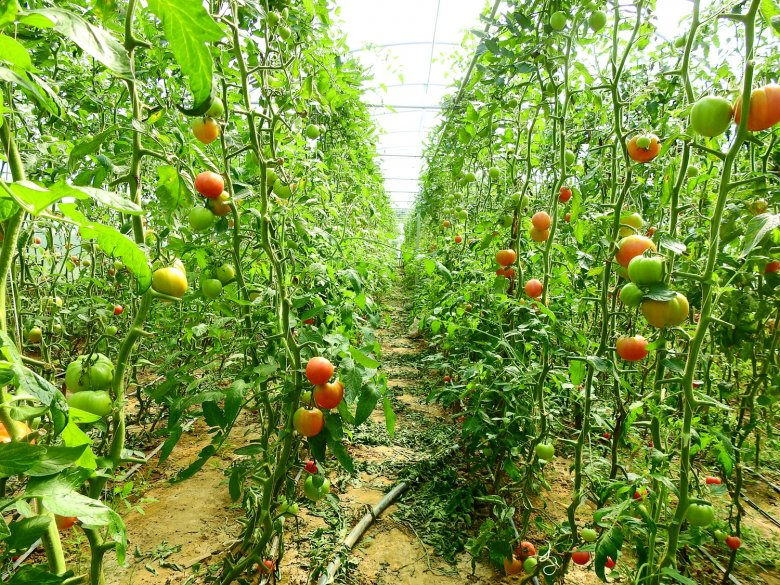 Magukra maradt zöldségtermesztők – a Szilágyságban is egyre nehezebb piacolásból megélni