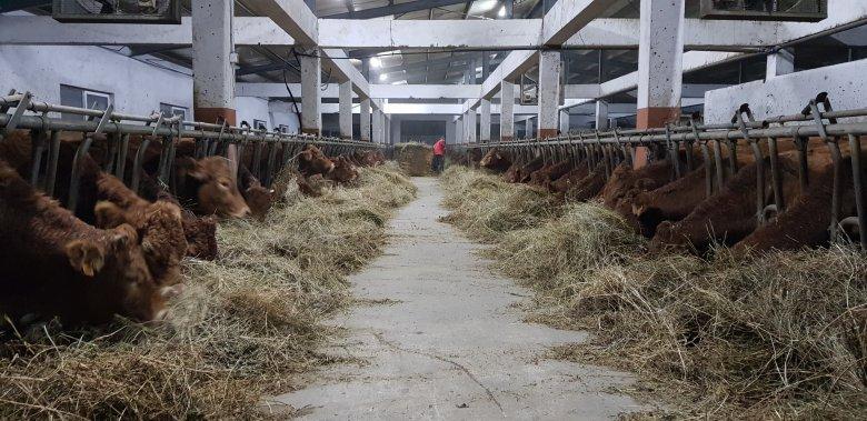 Közösen gazdálkodó farmerek a Szilágyságban: nyugati típusú szövetkezetek disznó- és húsmarhatartók számára